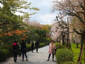 Nijo-jo gardens sakura kyoto japan freelance writer