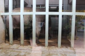 Elephant caged Ueno Zoo Tokyo Japan JaPlanning awful