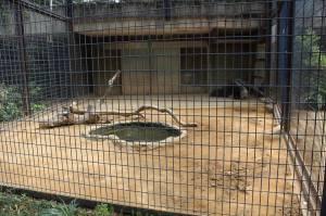 anteater enclosure Ueno Zoo Japan Tokyo travel JaPlanning