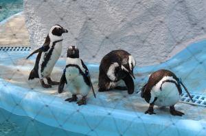 Penguins Ueno Zoo travel Japan JaPlanning tokyo