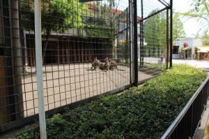 kangaroo enclosure Ueno zoo tokyo japan travelling japlanning