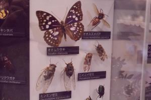 ōsuzumebachi giant japanese hornet museum of science and nature ueno tokyo Nihonkan 2F south JaPlanning travel