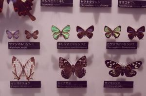 Butterflies Museum of Nature and Science Tokyo Ueno Chikjukan gallery Japan JaPlanning travel