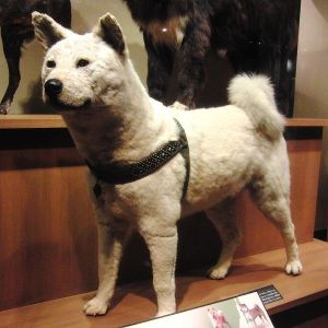 Hachiko Nihonkan Gallery National Museum  Tokyo Japan Akita breed JaPlanning travel