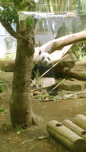 ShinShin Ueno Zoo Tokyo Japan JaPlanning panda