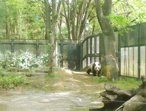 LiLi Panda Ueno Zoo Tokyo Japan JaPlanning