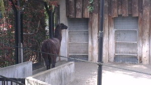 Llama enclosure Ueno Zoo Japan Tokyo travel JaPlanning